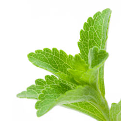 Stevia is a sweet herb