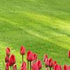 lawn-garden-flowers-100x100